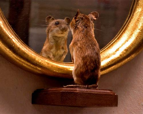 Stii... noi astia frumosi sintem cam depresati ... dar ne uitam in oglinda si ne trece!